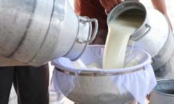 Dị ứng sữa bò, không thể uống nổi sữa tươi, bạn có giống tớ không?
