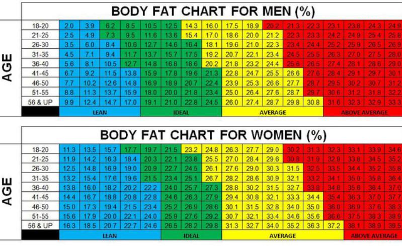 cách đo lượng mỡ trong cơ thể_2